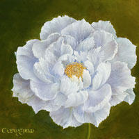 White Peony Opening SOLD